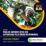 PODA DE ÁRVORES DEVE SER AUTORIZADA