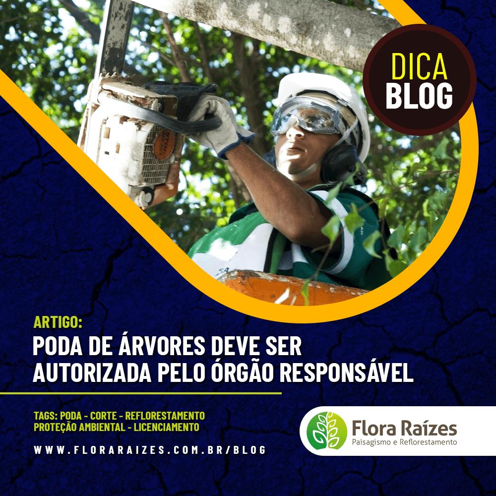 PODA DE ÁRVORES DEVE SER AUTORIZADA PELO ÓRGÃO RESPONSÁVEL