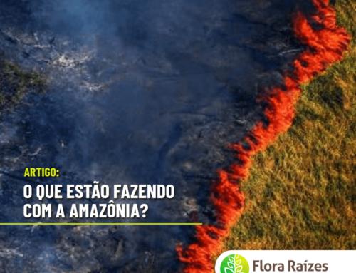 O QUE ESTÁ ACONTECENDO COM A AMAZÔNIA? SE O DESMATAMENTO NÃO FOR CONTIDO SERÁ O SEU FIM