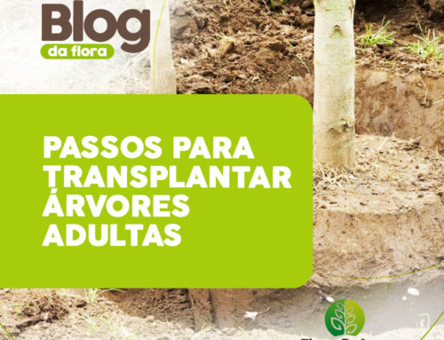 PASSOS PARA TRANSPLANTAR ÁRVORES ADULTAS