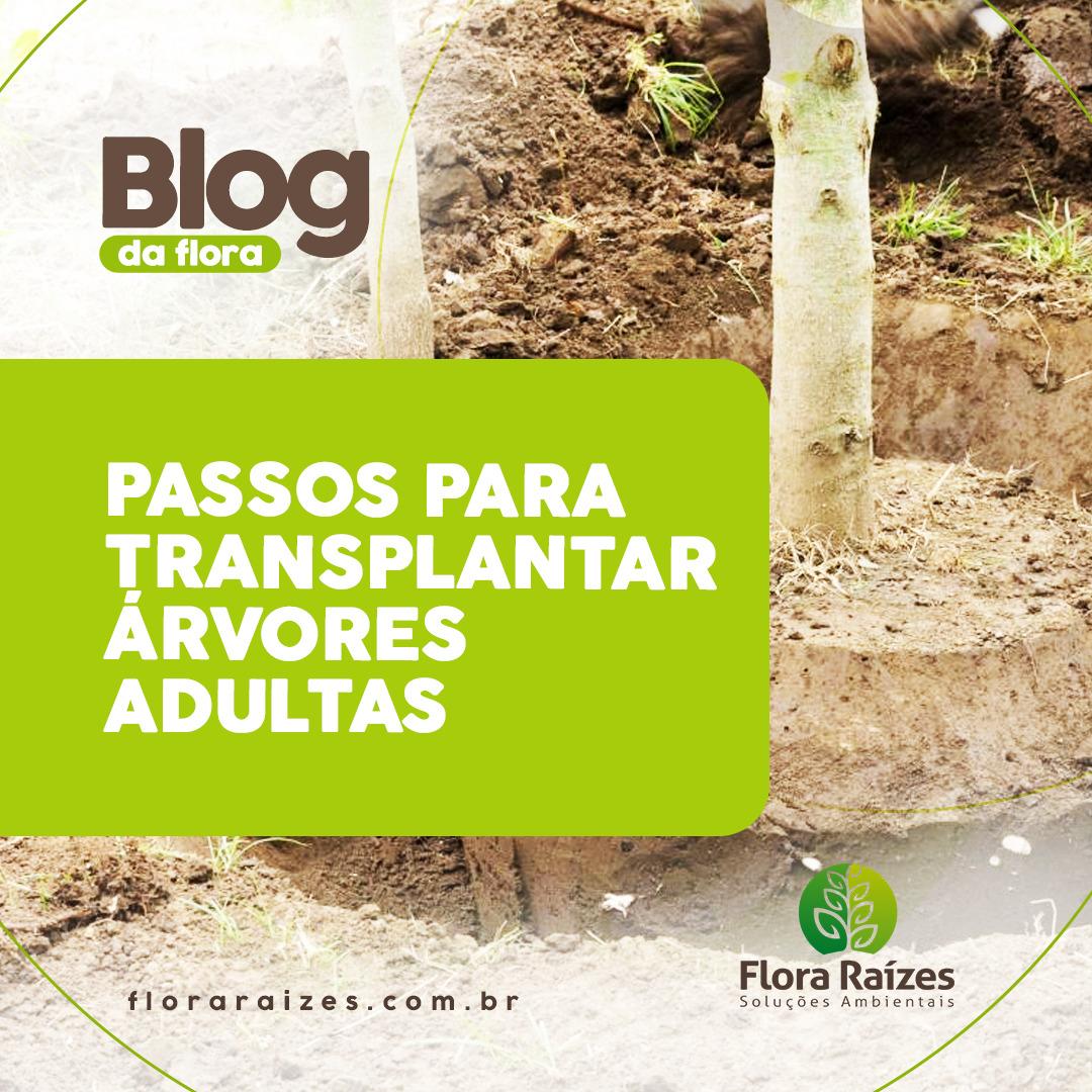 transplante de árvores flora raizes